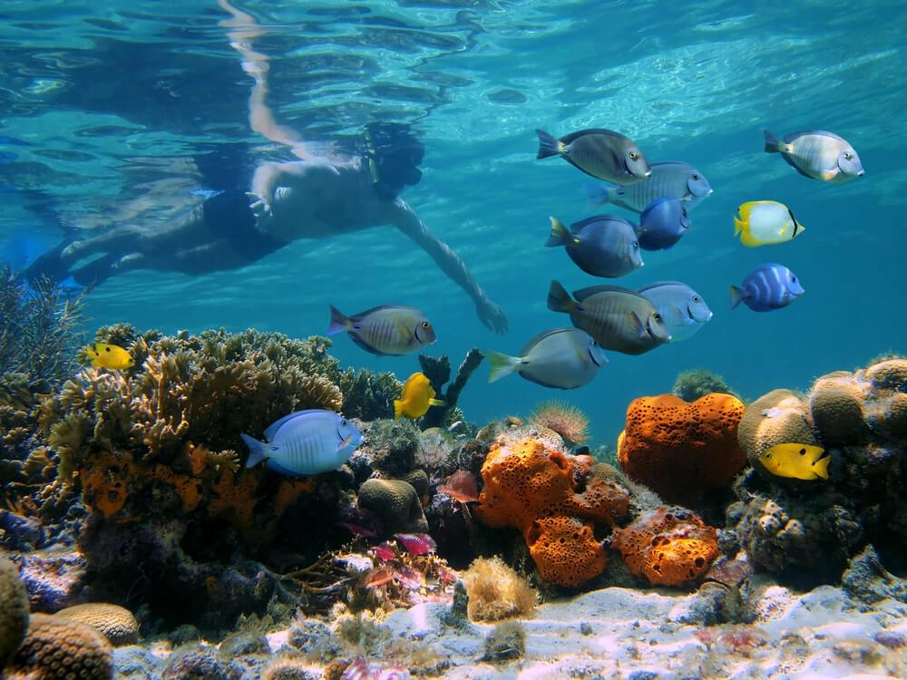 Snorkeling is popular in the Bahamas