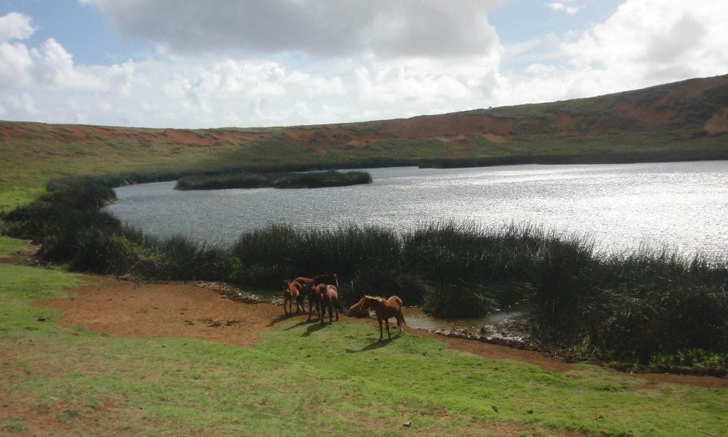 Easter Island's Wild Horses