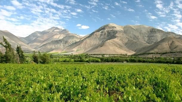 Vineyard in the Elqui Valley