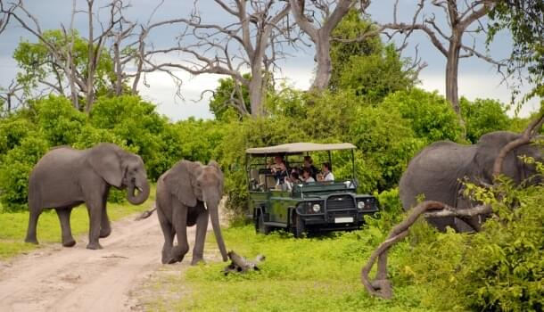 A safari in Botswana