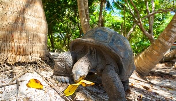 The Seychelles has exotic wildlife