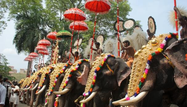 Elephants during the Pooram Festival