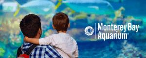 Monterey Bay Aquarium Shines as One of World's Best