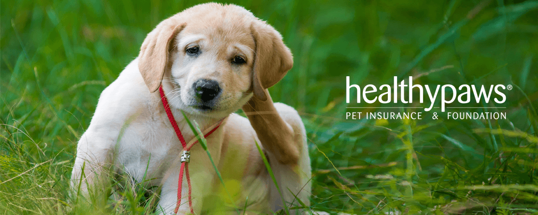 Healthy Paws Pet Insurance Helps Pet Lovers Reduce the Financial Cost of Care
