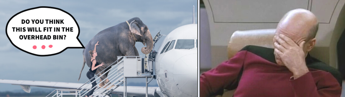 Woman escorts an elephant into the plane